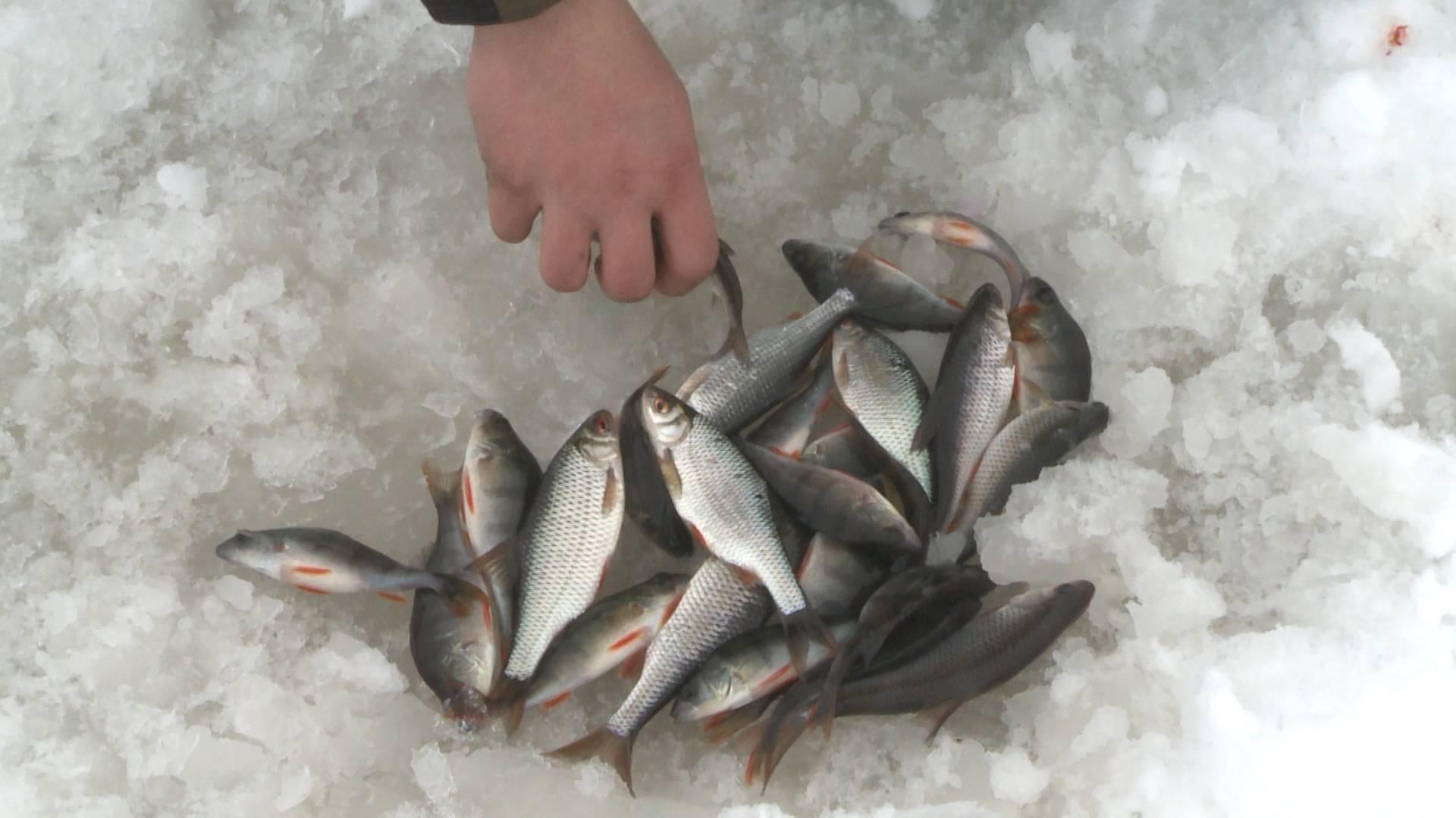 ловить рыбу на экран видео