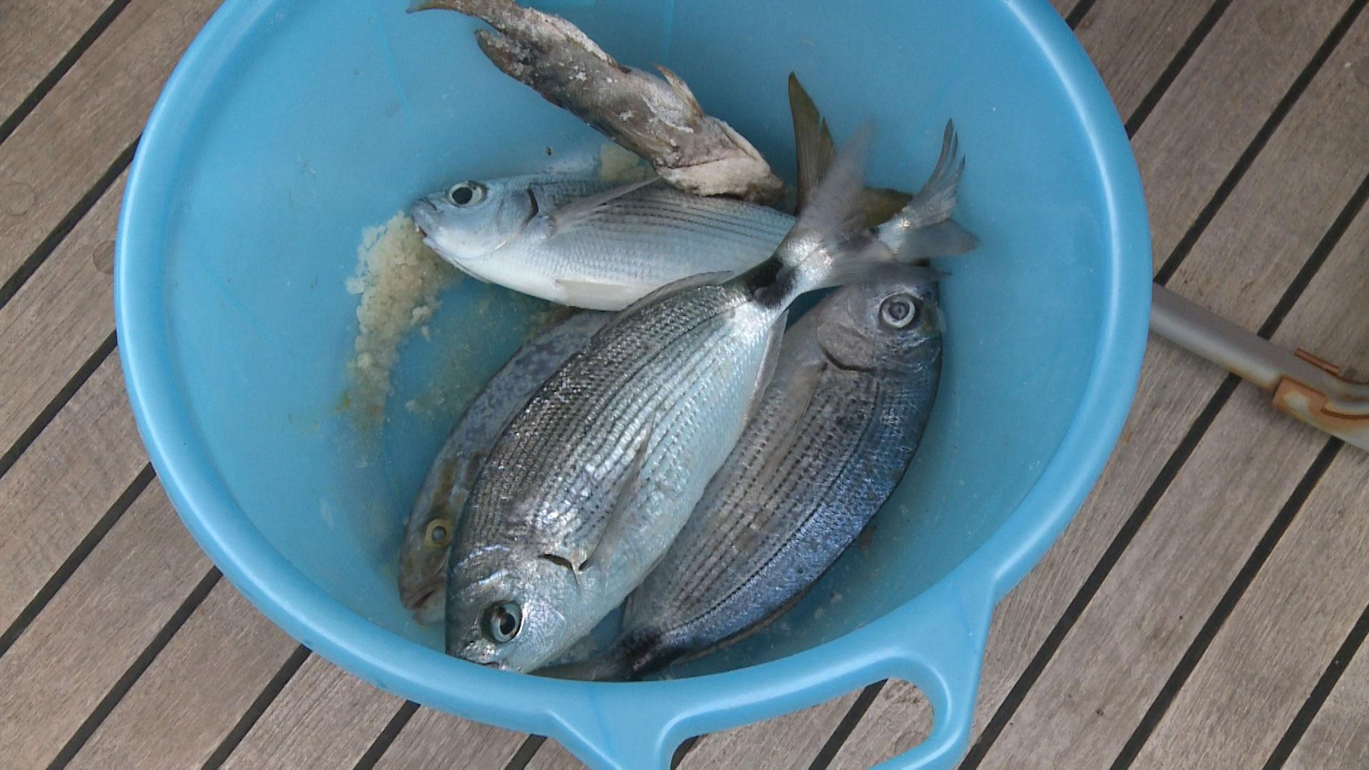 ловить рыбу дорад