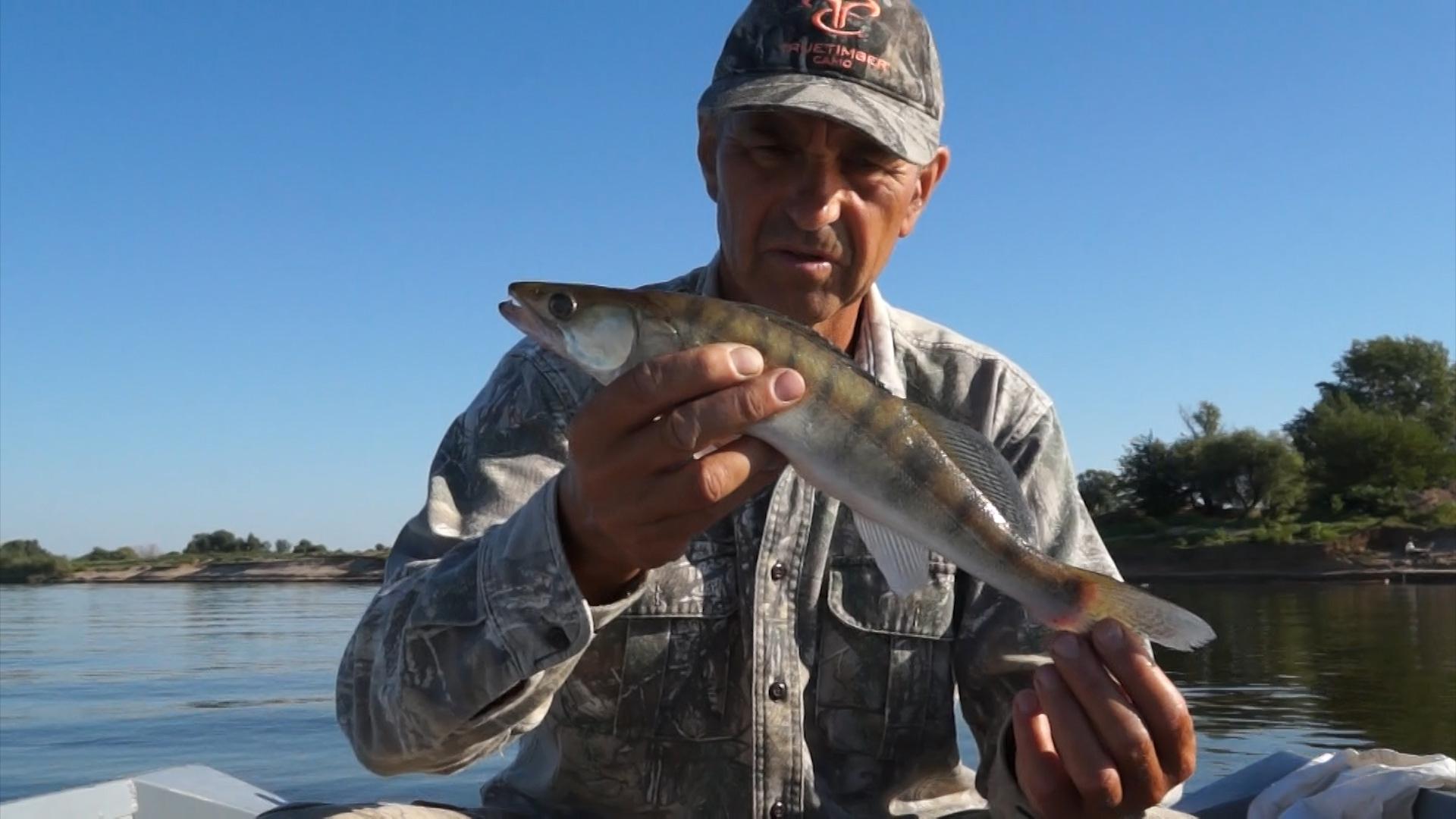 ловля хищной рыбы троллингом