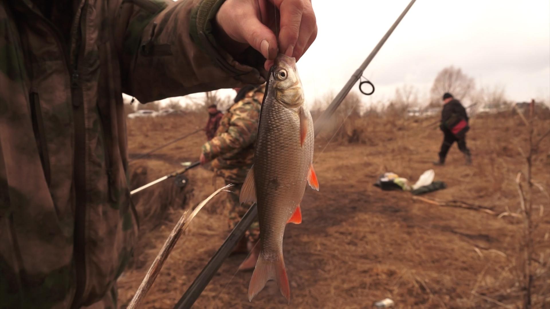 Запрет сезон рыбалки