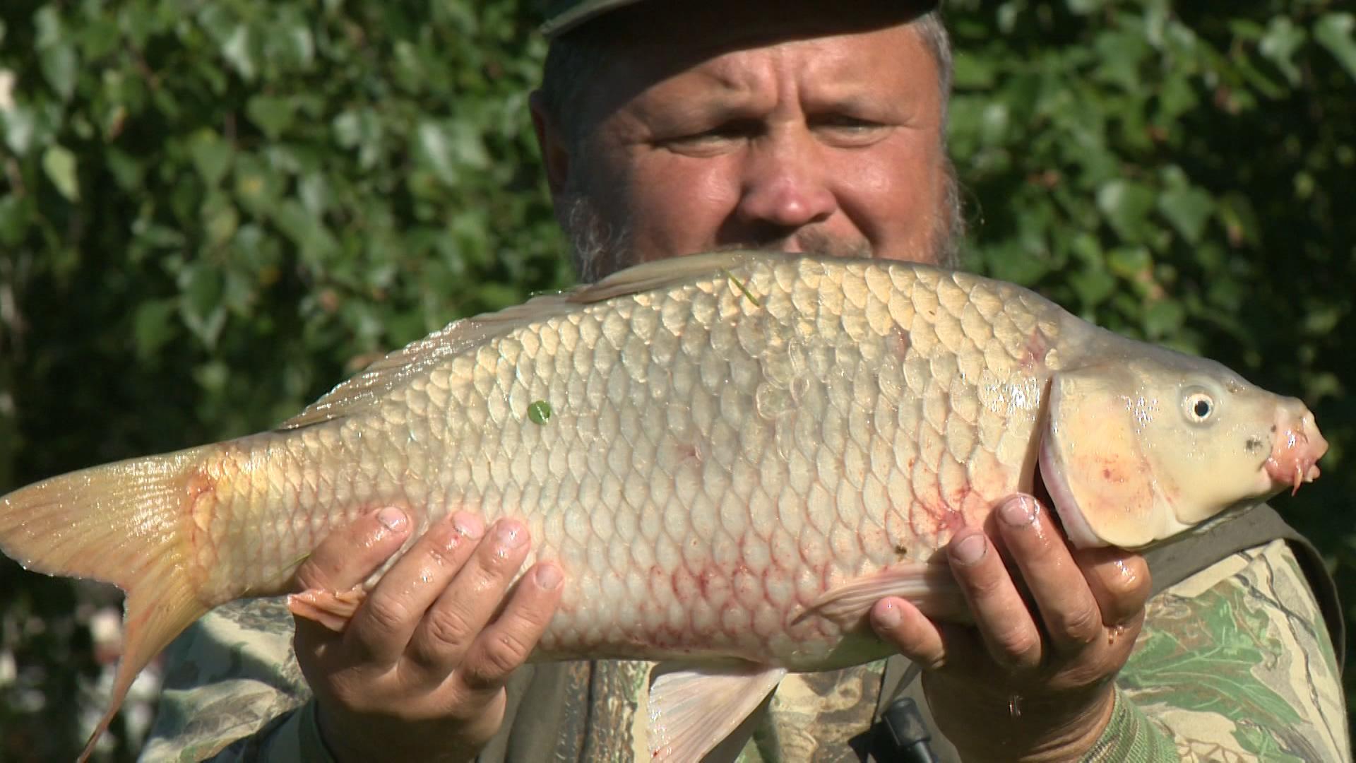 рыбалка на фидер видео сазан