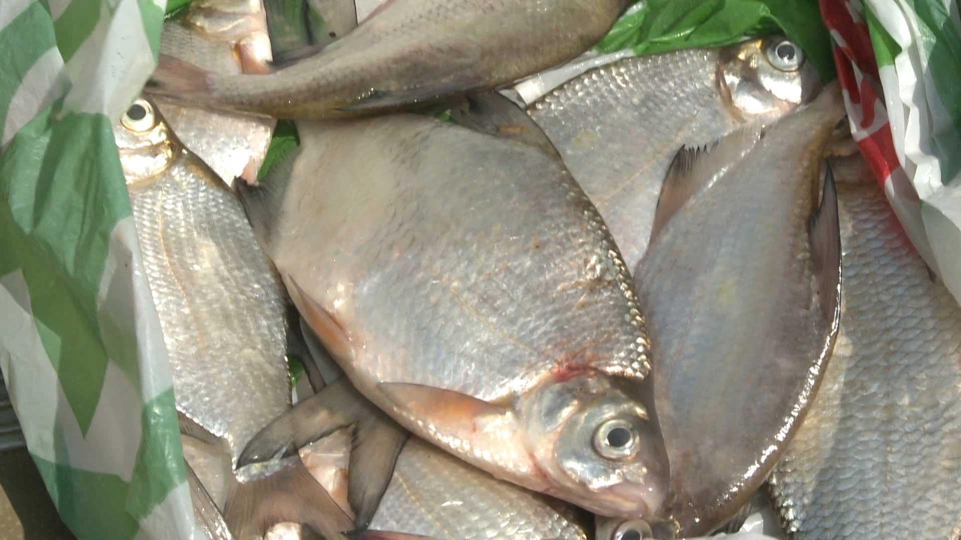 Рыба игла рецепты