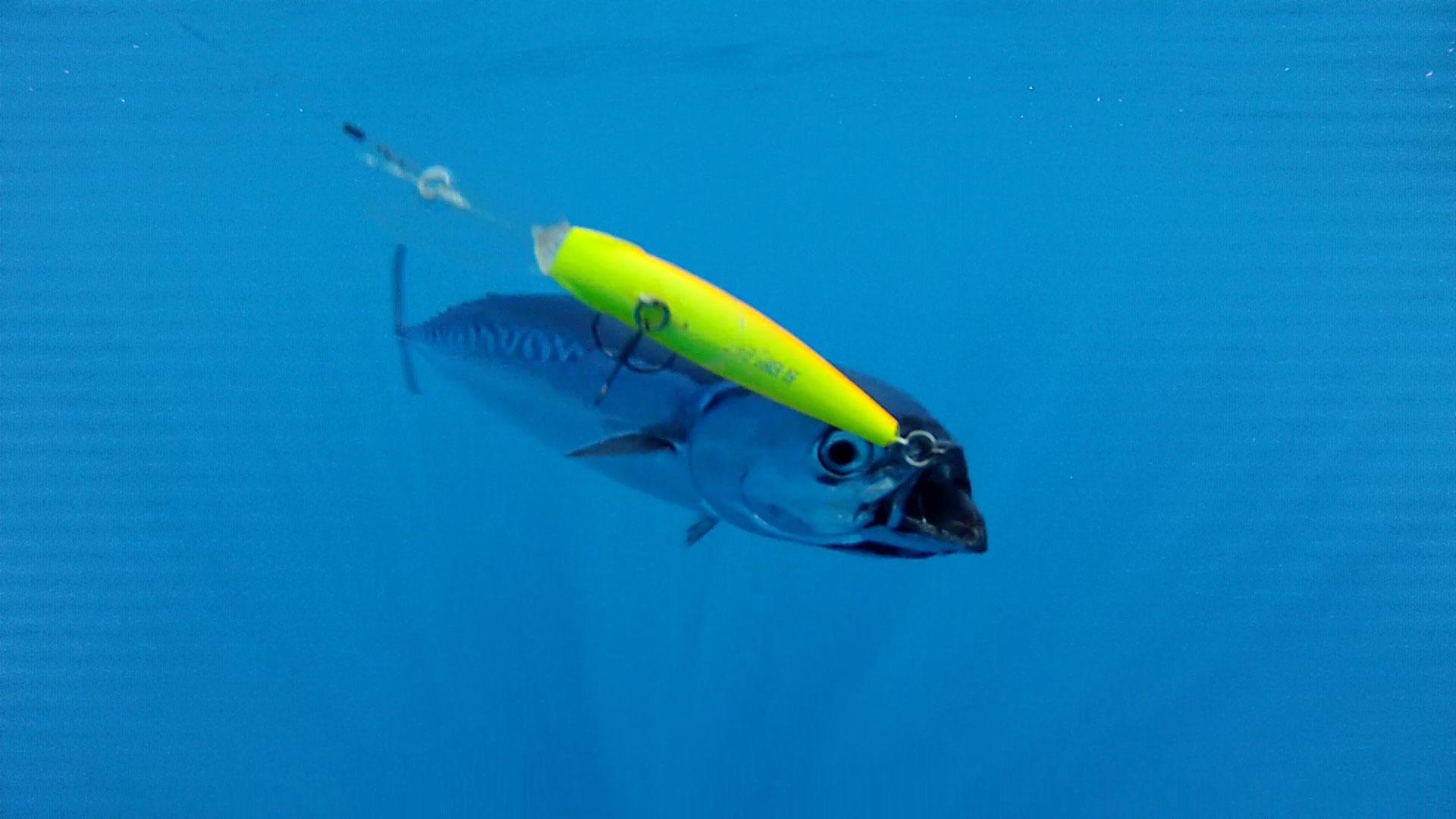 лицензия на ловлю тунца цена